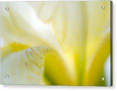 Yellow Iris 5 Acrylic Print