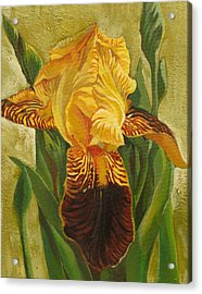 Acrylic Print featuring the painting Yellow Iris by Alfred Ng