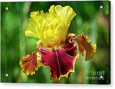 Acrylic Print featuring the photograph Yellow Iris by Craig Leaper