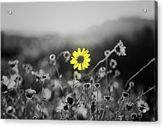 Yellow Is The Color Acrylic Print
