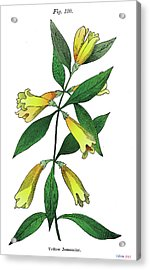 Yellow Jessamine Acrylic Print by Ziva