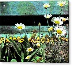 Yellow Kayaks Acrylic Print
