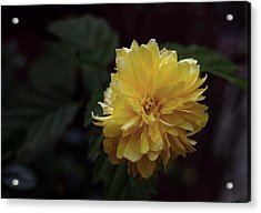 Yellow Acrylic Print by Keith Elliott