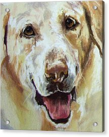 Yellow Lab Acrylic Print by Debbie Anderson