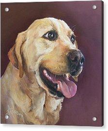 Yellow Labrador Acrylic Print by Debbie Anderson