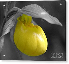 Yellow Lady Slipper Partial Acrylic Print by Smilin Eyes  Treasures