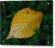 Yellow Leaf Acrylic Print by Juergen Roth