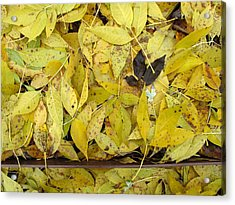 Yellow Leaves On The Ground  Acrylic Print by Lyle Crump