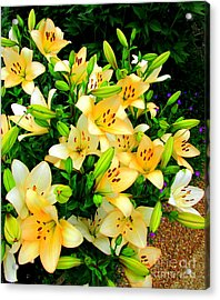 Acrylic Print featuring the photograph Yellow Lilies 2 by Randall Weidner