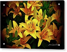 Acrylic Print featuring the photograph Yellow Lilies by Joann Copeland-Paul
