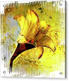 Yellow Lily Acrylic Print by Bernard Jaubert