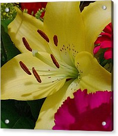 #yellow #lily Detail. Love The Pollen Acrylic Print
