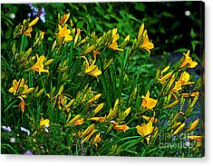 Acrylic Print featuring the photograph Yellow Lily Flowers by Susanne Van Hulst