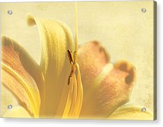 Yellow Lily Acrylic Print by Gary Smith