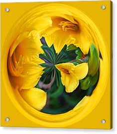 Yellow Lily Orb Acrylic Print by Bill Barber