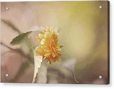 Yellow Love Acrylic Print