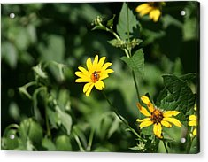 Yellow On Yellow Acrylic Print by Gregory Jeffries