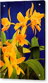 yellow Orange Orchids Acrylic Print by Stephen Mack