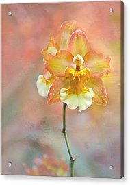 Acrylic Print featuring the photograph Yellow Orchid by Ann Bridges