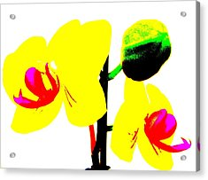 Yellow Orchids Abstract Acrylic Print by Beth Akerman
