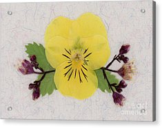 Yellow Pansy And Coral Bells Pressed Flowers Acrylic Print