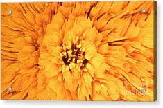 Yellow Flower Under The Microscope Acrylic Print