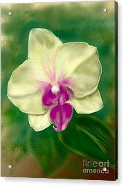 Yellow Phalenopsis Acrylic Print