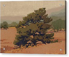 Yellow Pine Acrylic Print