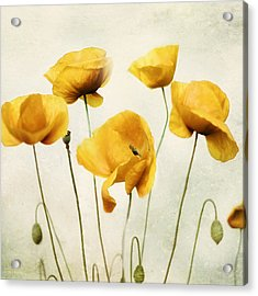 Yellow Poppies - Square Version Acrylic Print