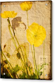 Yellow Poppies Acrylic Print by Wesley Phillips