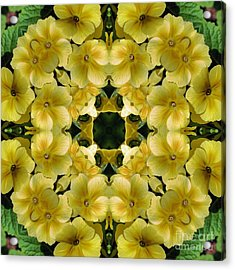 Yellow Primrose Kaleidoscope Acrylic Print by Smilin Eyes  Treasures