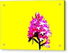 Yellow Pyramid Orchid Acrylic Print by Richard Patmore
