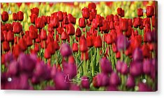 Yellow Red Purple Acrylic Print by Nick Boren