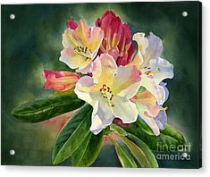 Yellow Rhododendron Dark Background Acrylic Print by Sharon Freeman