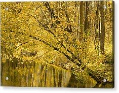 Yellow River Acrylic Print by Ryan  Krueger