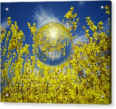 Acrylic Print featuring the photograph Yellow by Robert Geary