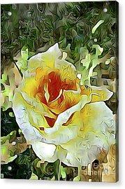 Yellow Rose 04 ...21.39 Rose Rose Image Acrylic Print