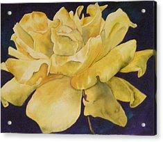Yellow Rose 101 Acrylic Print