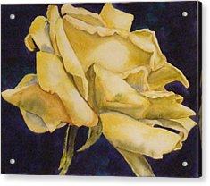 Yellow Rose 102 Acrylic Print