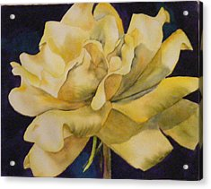 Yellow Rose 103 Acrylic Print
