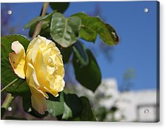 Yellow Rose 2 Acrylic Print by Remegio Onia