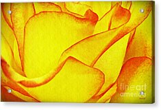 Yellow Rose Abstract Acrylic Print