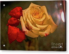 Acrylic Print featuring the photograph Yellow Rose And Chinese Lanterns by Diana Mary Sharpton