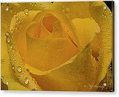Yellow Rose And Dew Acrylic Print by Marti Buckely