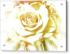 Acrylic Print featuring the photograph yellow Rose by Athala Carole Bruckner