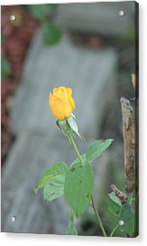 Yellow Rose Bud Acrylic Print by ShadowWalker RavenEyes Dibler