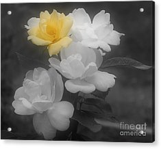 Yellow Rose Cluster Partial Color Acrylic Print by Smilin Eyes  Treasures