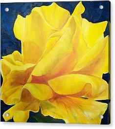 Yellow Rose Acrylic Print by Dana Redfern