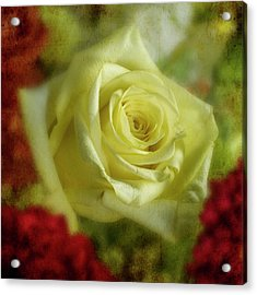 Yellow Rose Acrylic Print by Garry McMichael