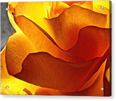 Yellow Rose In The Sun Acrylic Print by Lori Miller